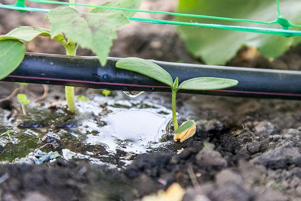 san antonio irrigation