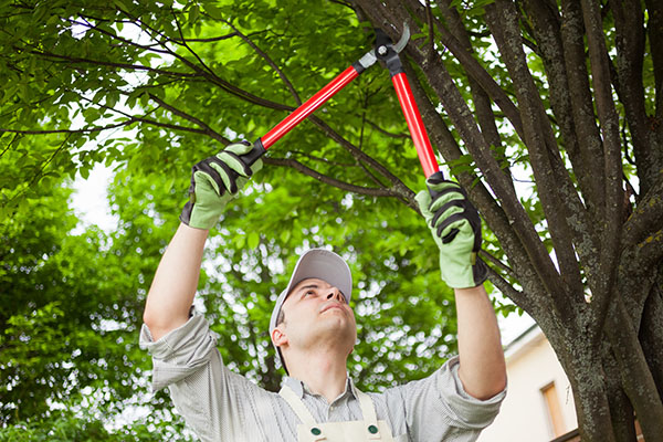 tree trimming service san antonio